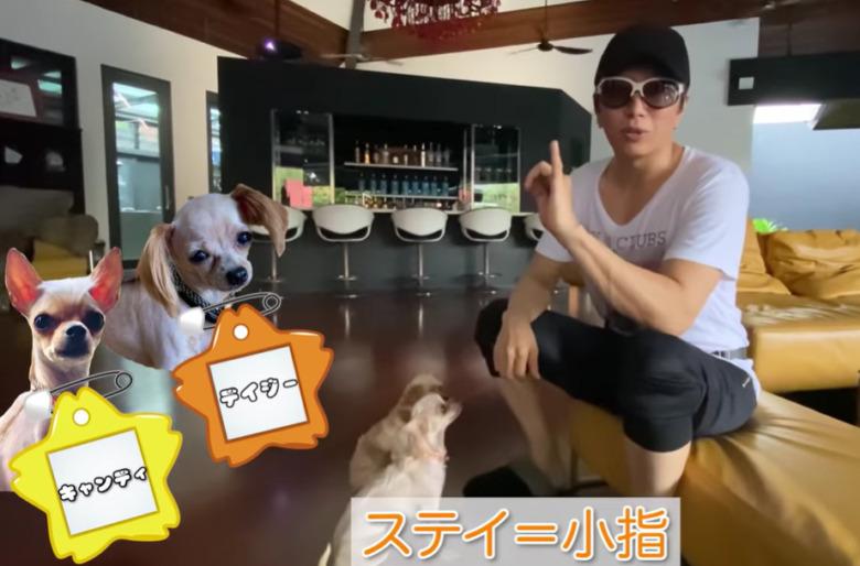 GACKTのドッグトレーニング動画②