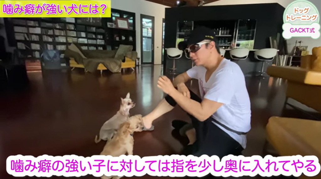 GACKTのドッグトレーニング動画