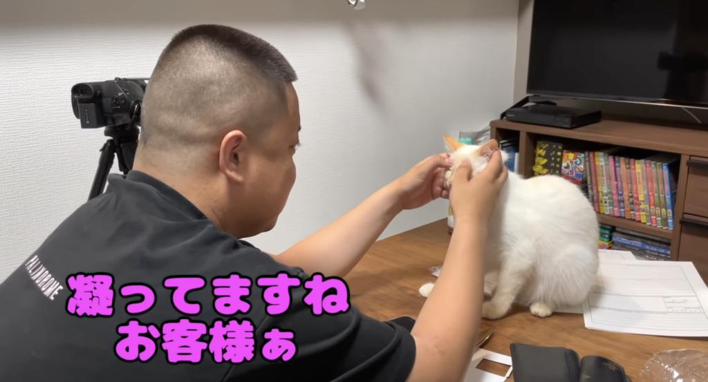 タンパク質武田の猫ユキをマッサージするゆめまる